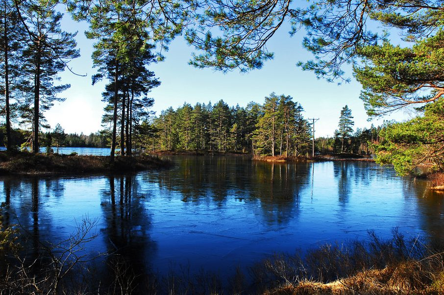 cropped-swedish-forest-lake.jpg
